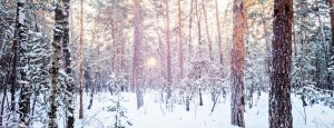 Winterzeit Wald