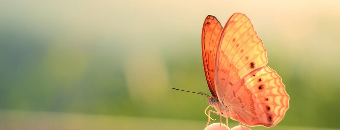 Frühling Schmetterling Hand